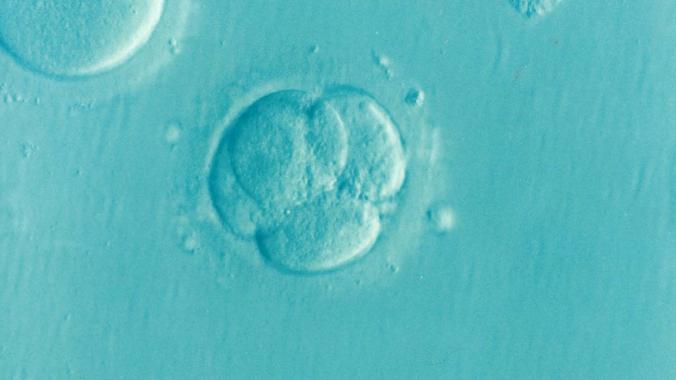 embryo-1514192_1920